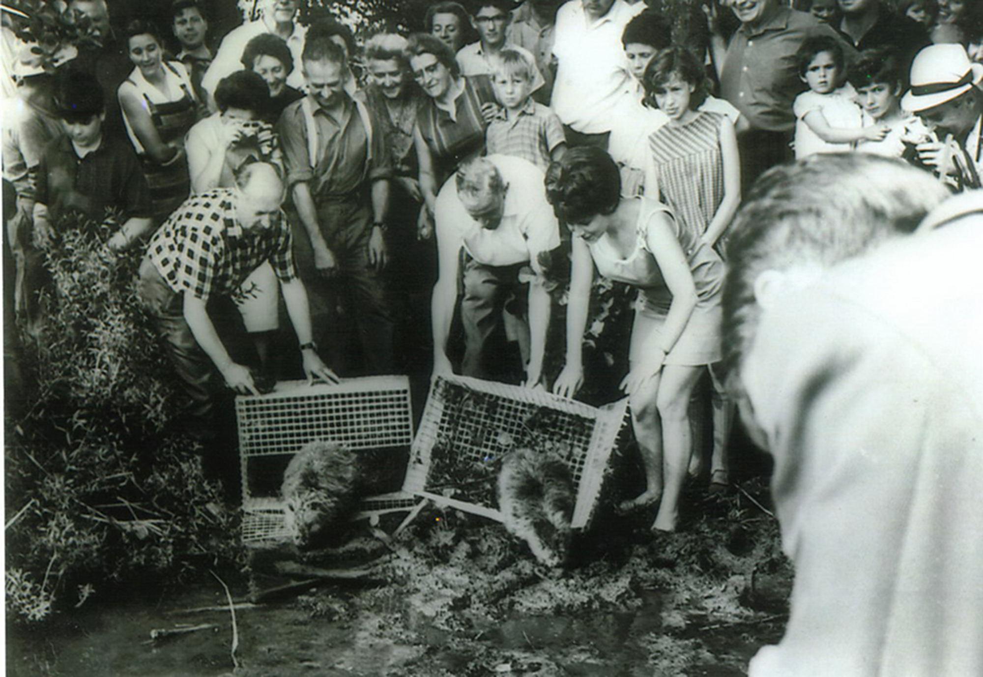 Biberaussetzung im Jahr 1968