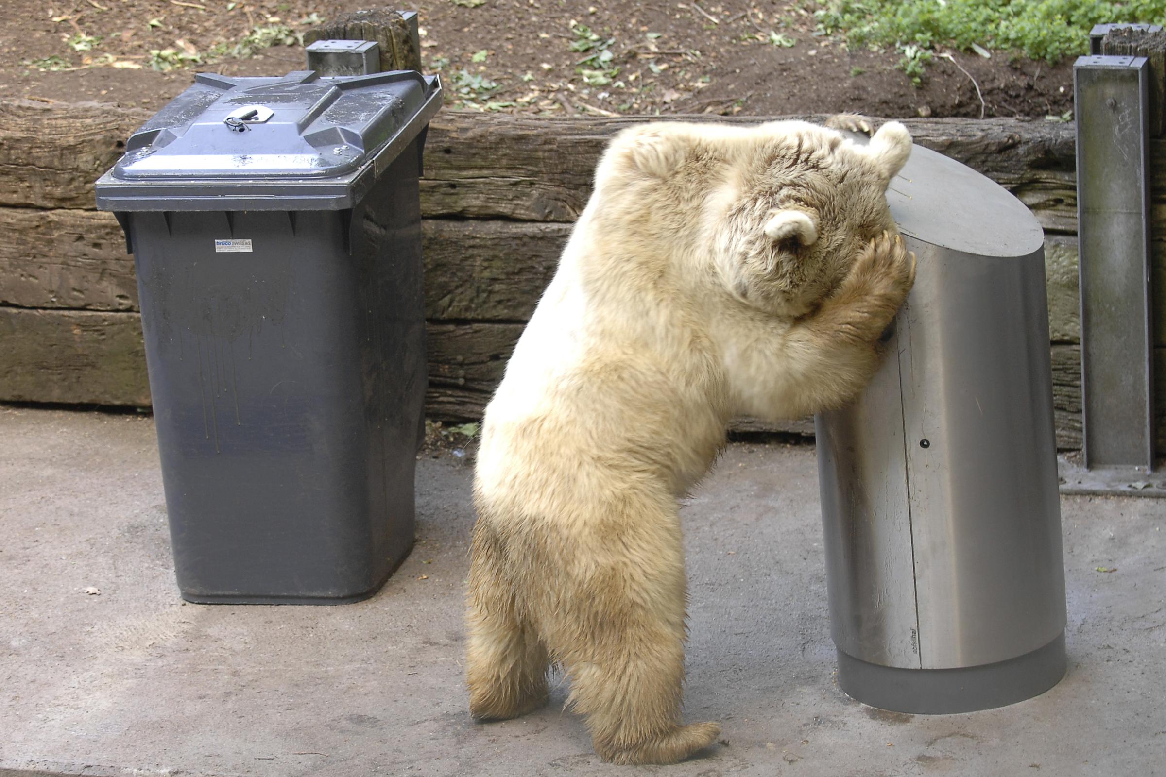 Test von bärensicheren Abfalleimern