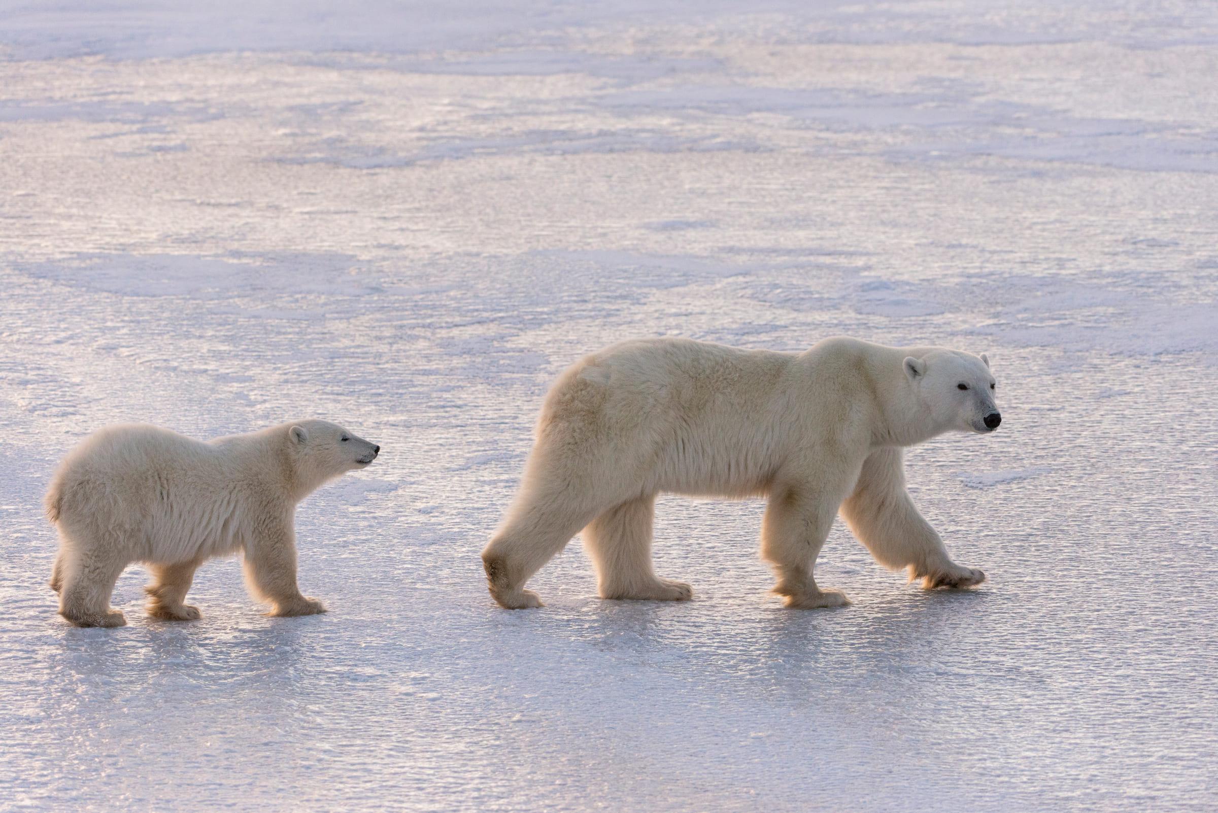 Un ourse et son petit