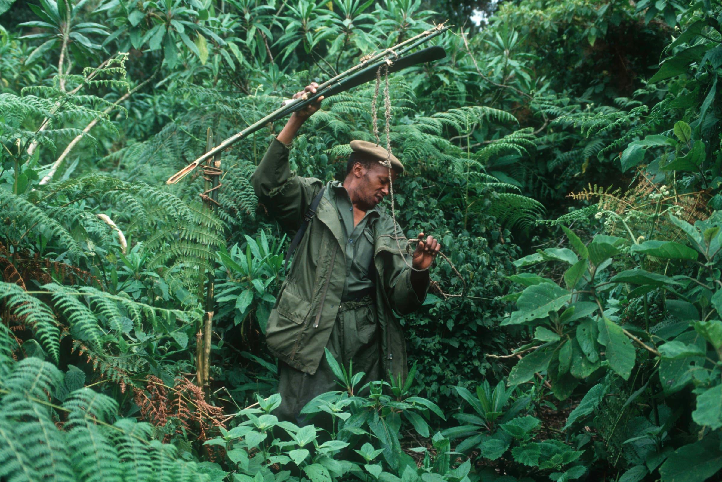 Ein Wildhüter entfernt Fallen, die Wilderer gelegt haben.