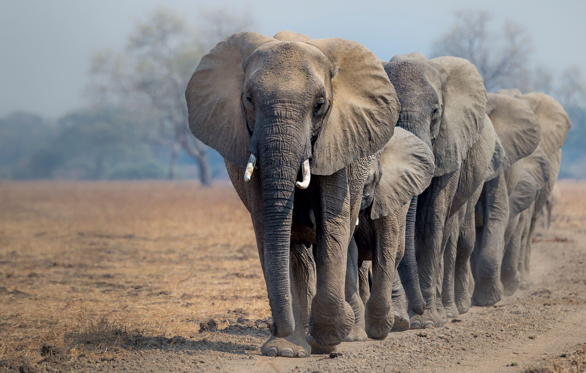 Elefanten-Strasse