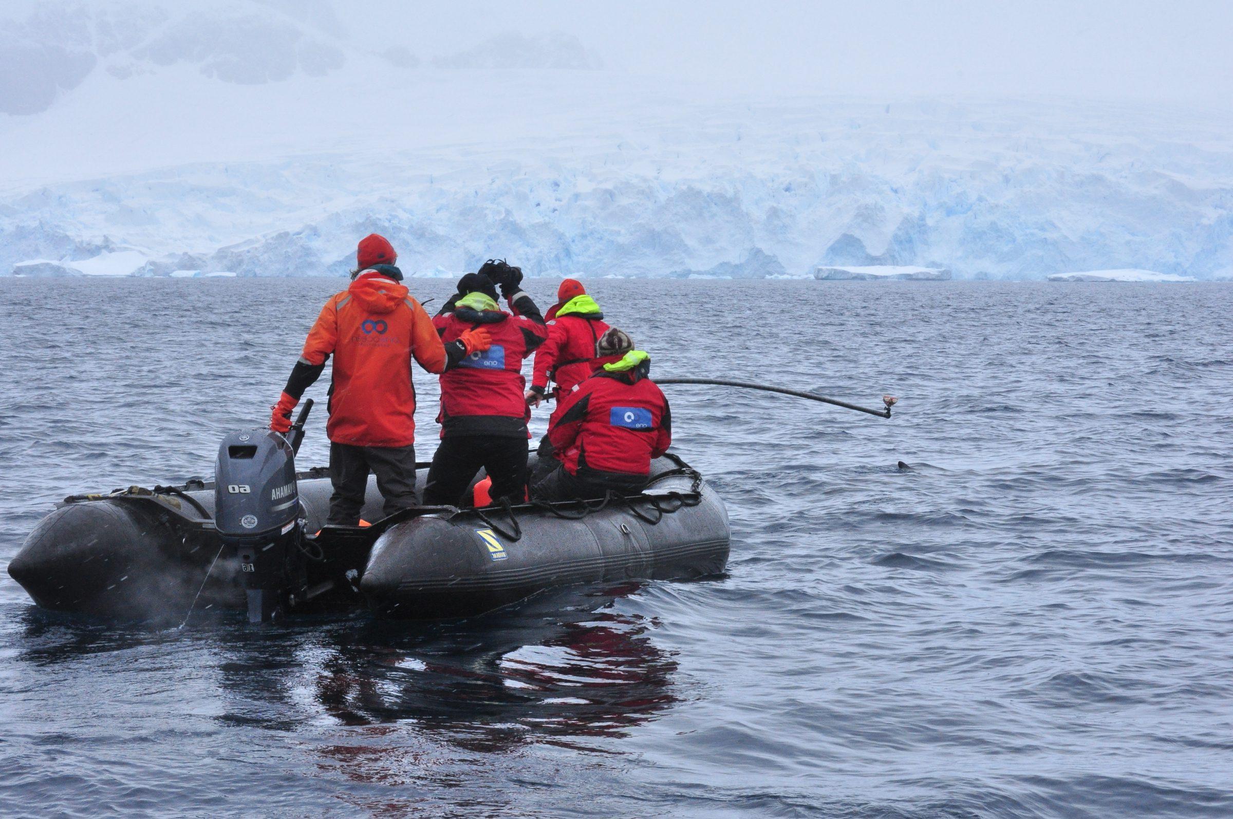 Forscher befestigen eine «Wal-Kamera» an einen Zwergwal in der Antarktis