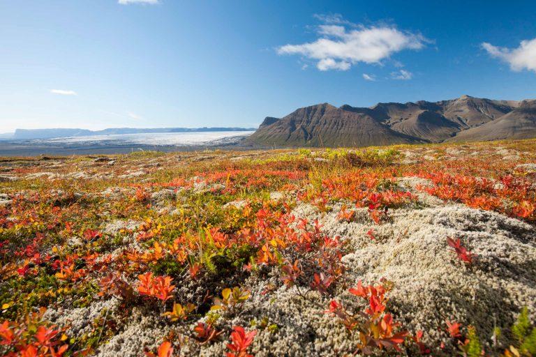 Le Skeiðarárjökull en Islande