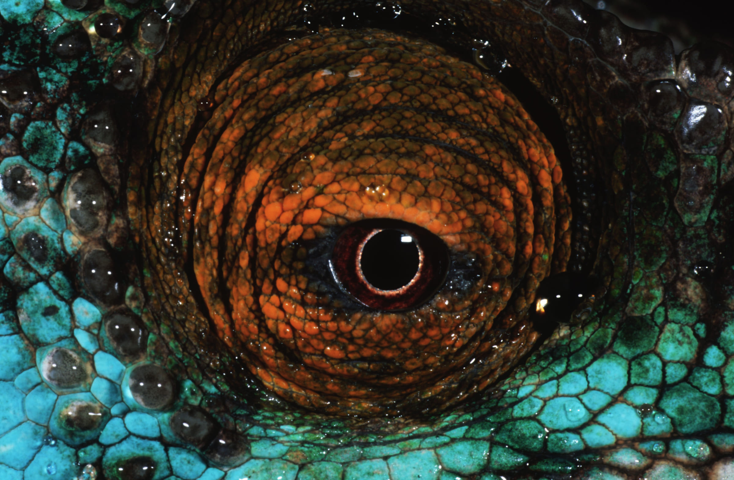 L'oeil du caméléon