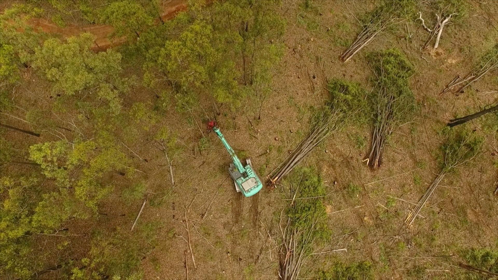Alberi vengono abbattuti nel Queensland con un bulldozer.