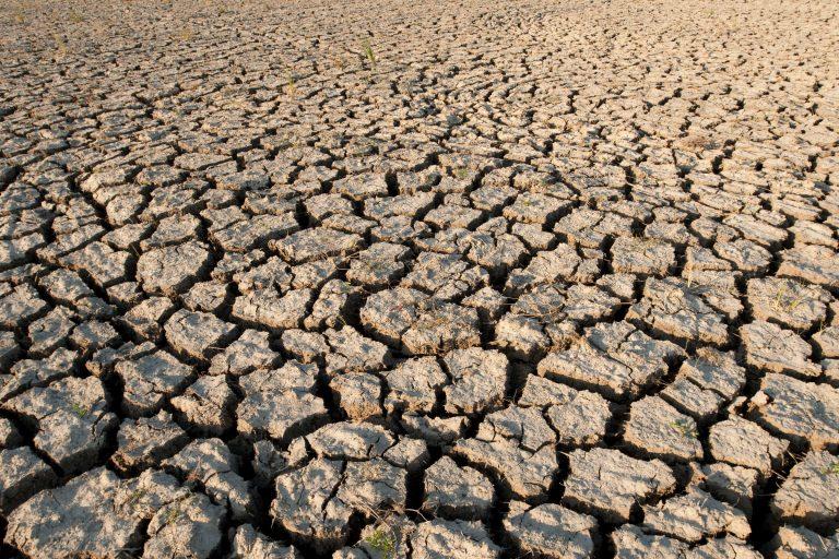 Terreno arido in una risaia
