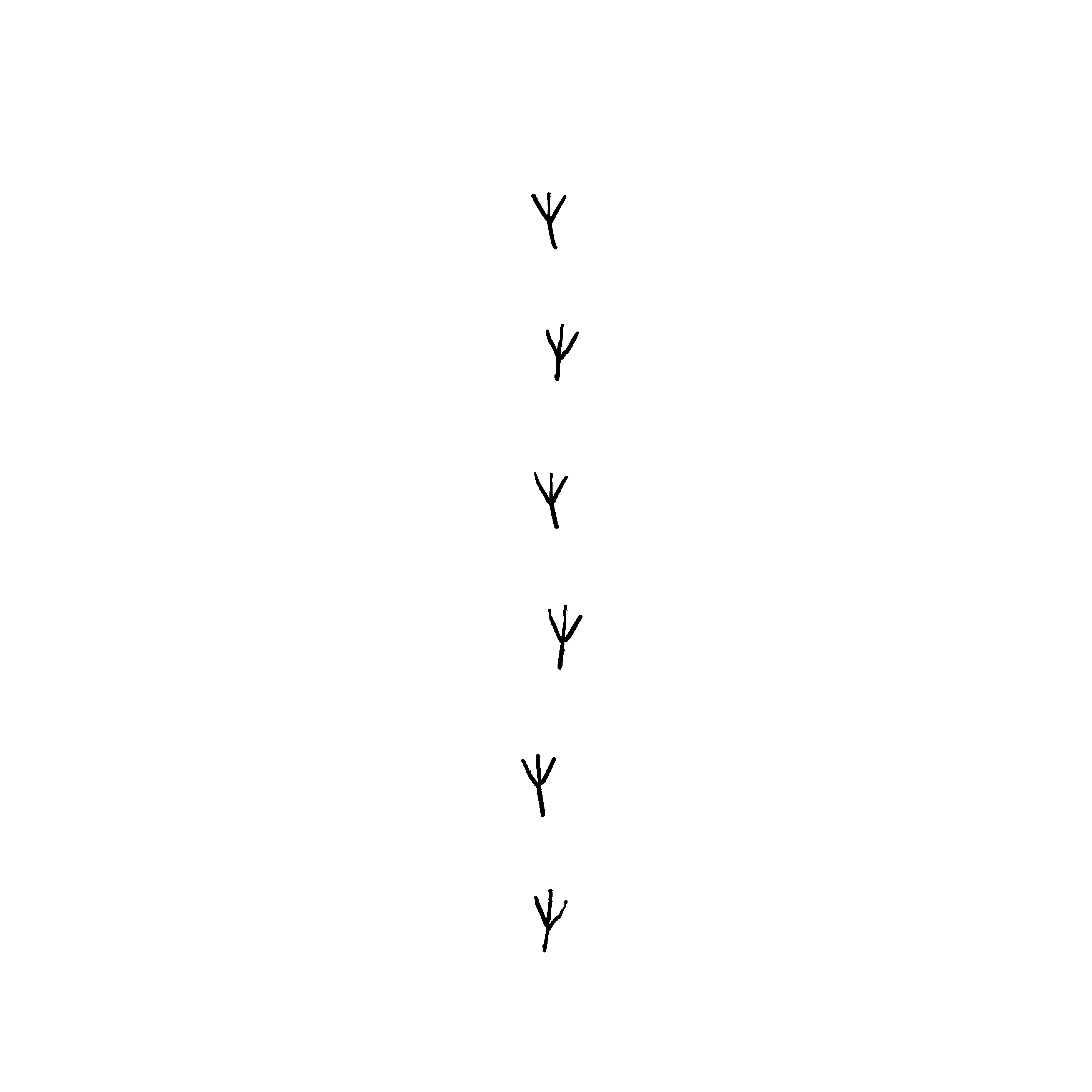 Krallenabdrücke einer Krähe