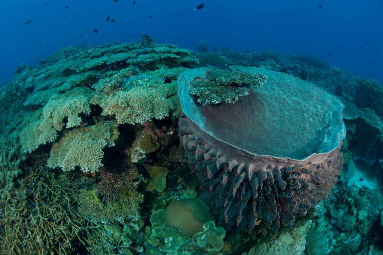 Ein Riesenschwamm umgeben von Korallen und Fischen in Papua-Neuginea