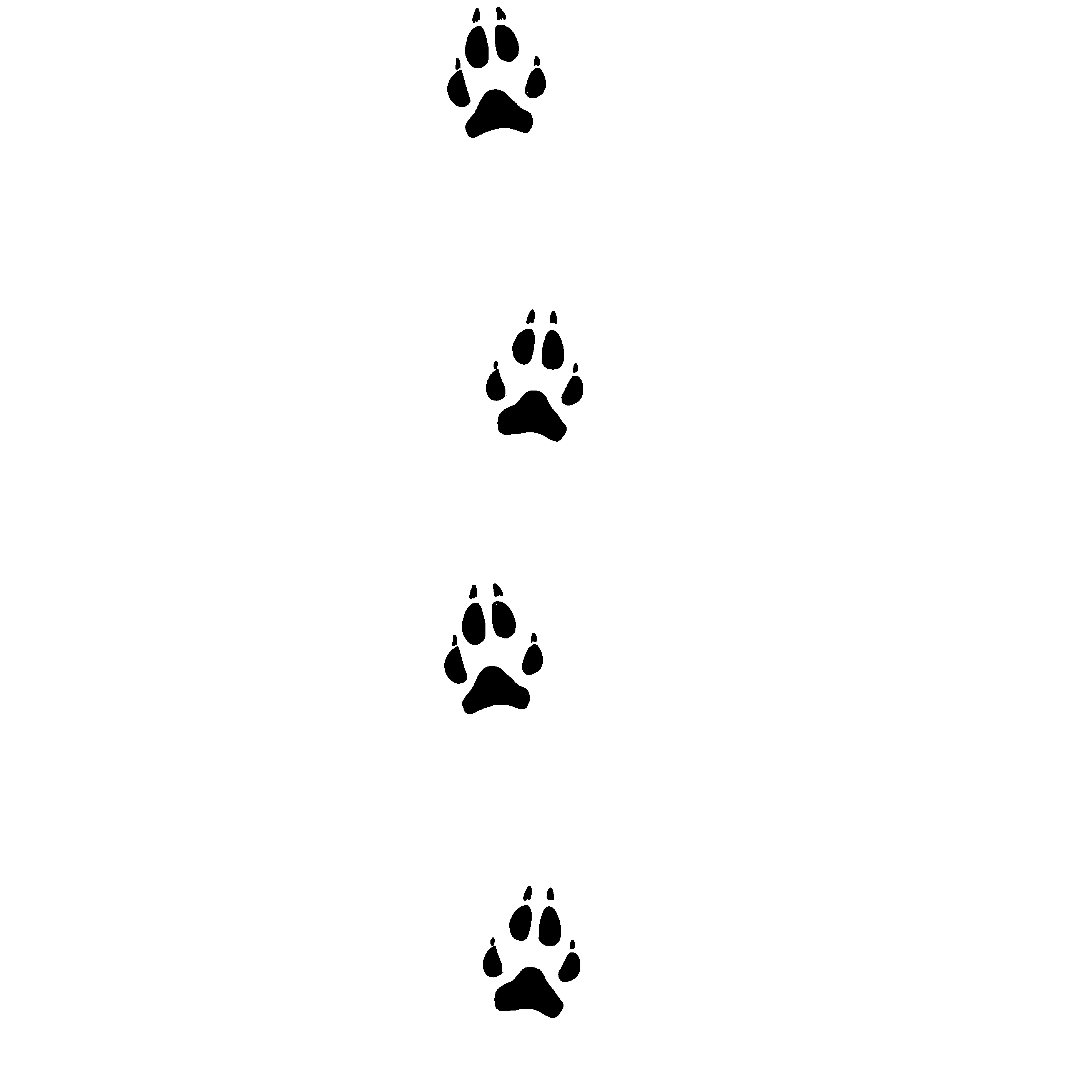 Pfotenabdruck eines Wolfes