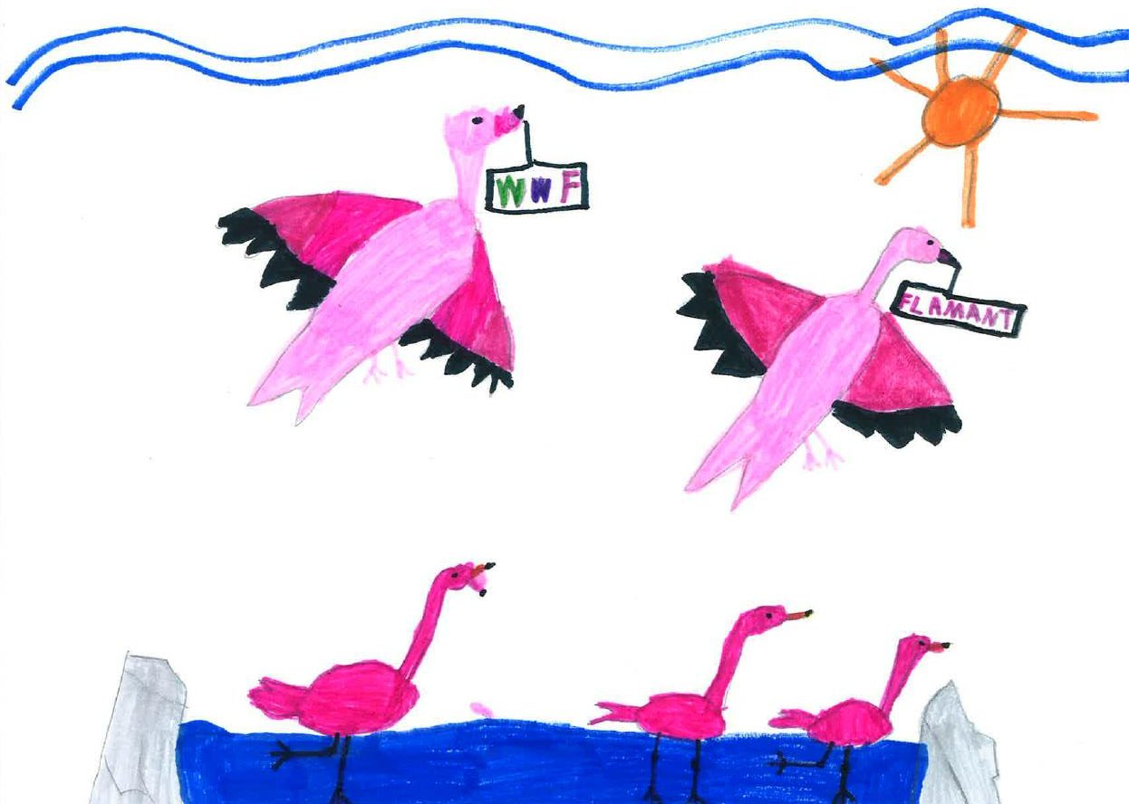 Des flamants roses dessinés par Lea