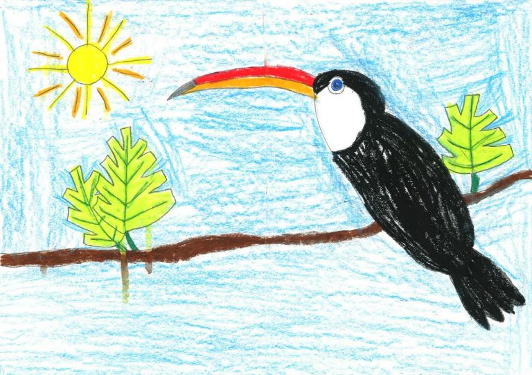 Un toucan dessiné par Veronika