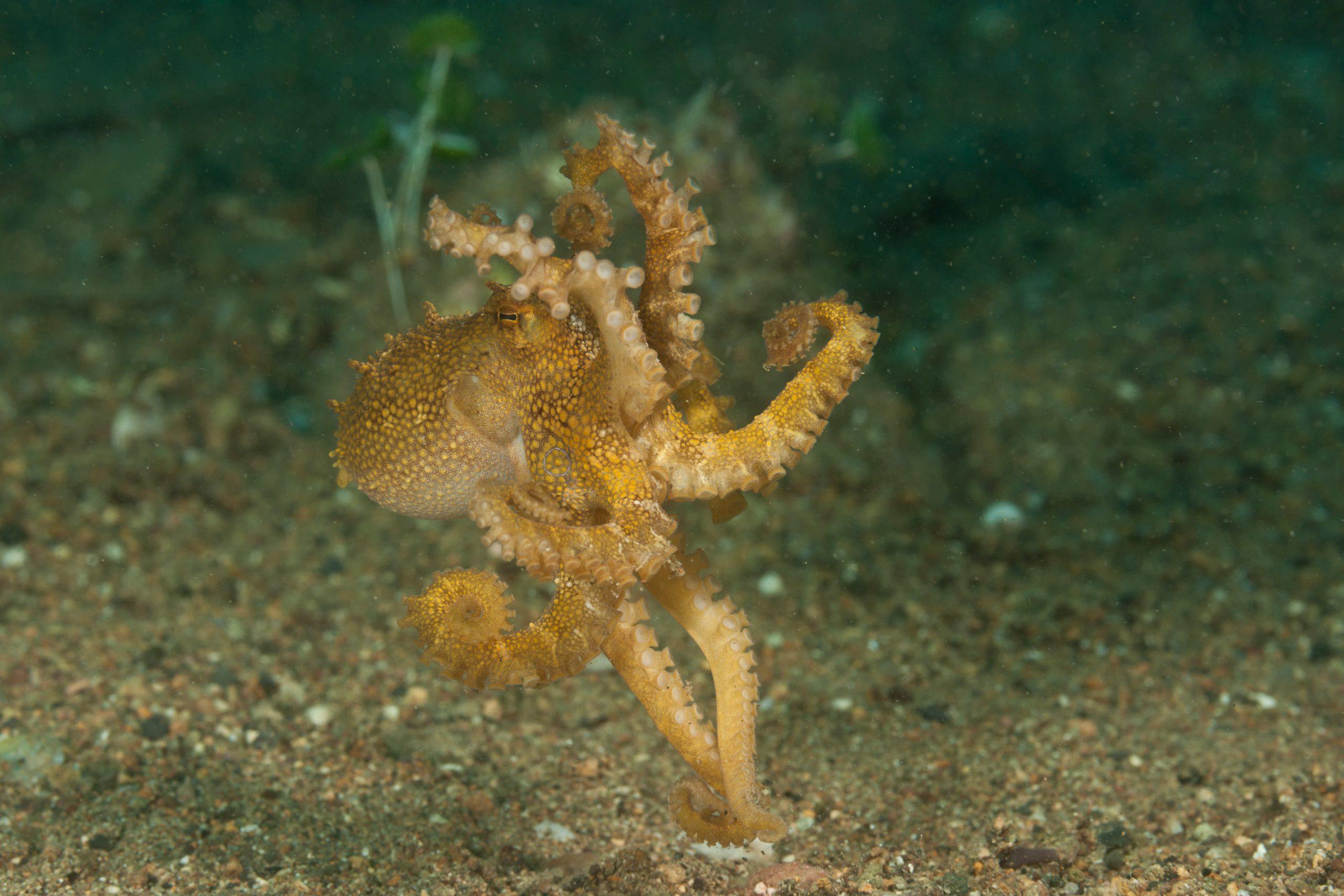 Une sorte de pieuvre
