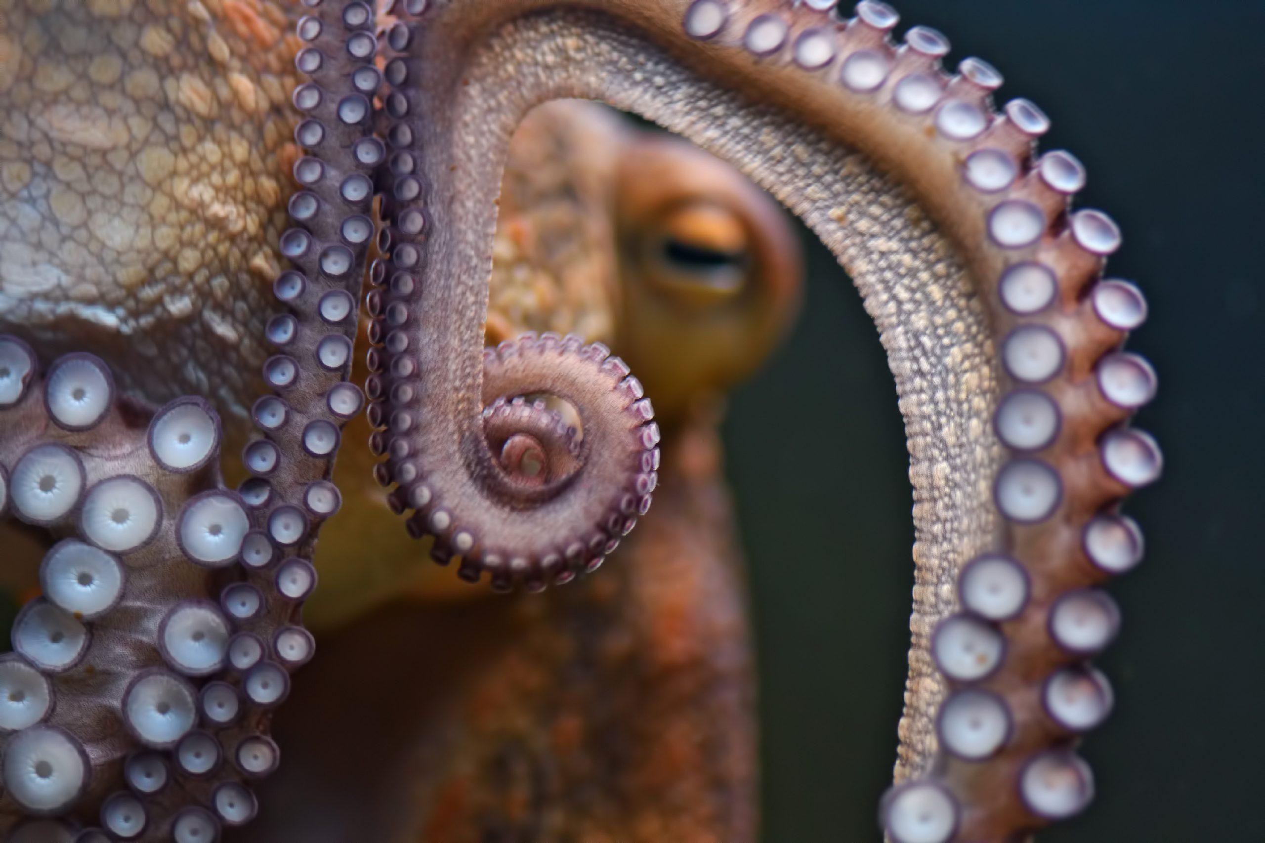 Les bras d'une pieuvre