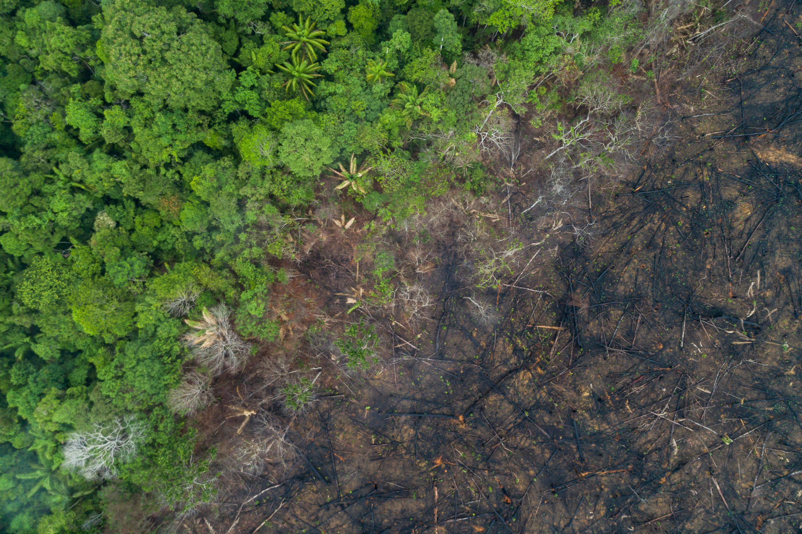 Zerstörung von Lebensraum